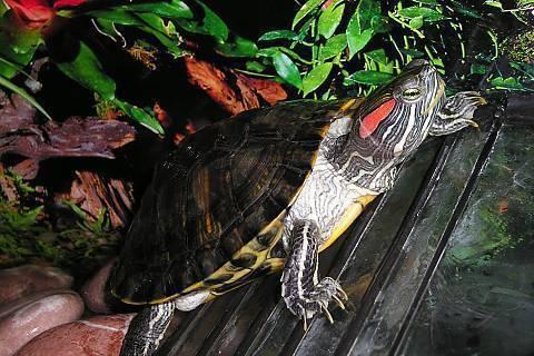 FOTKA - Želvička