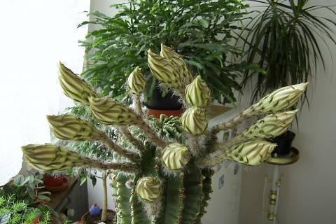 FOTKA - květ kaktusu