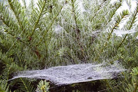 FOTKA - Pavoučí práce I