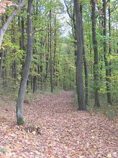 FOTKA - náš lesík