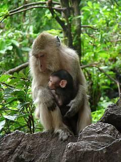 FOTKA - Opičky