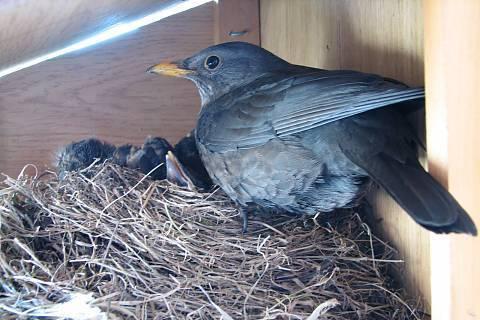 FOTKA - Kosí rodinka v ptačí budce