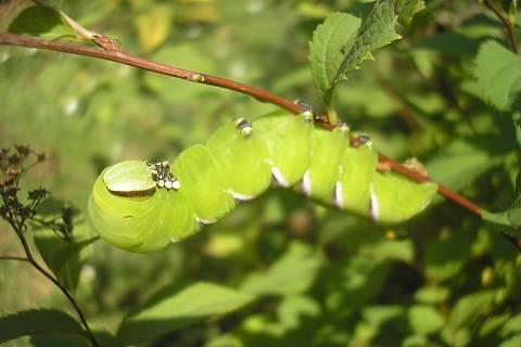 FOTKA - můra nebo motýl