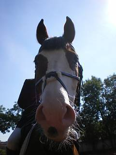 FOTKA - Ufo kůň