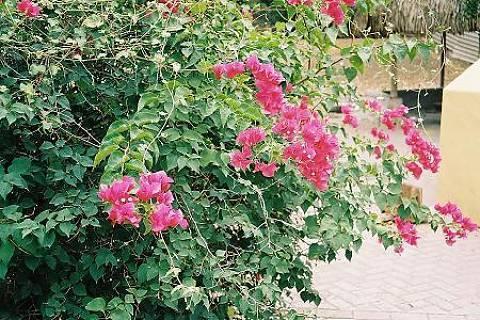 FOTKA - Květinové barvičky
