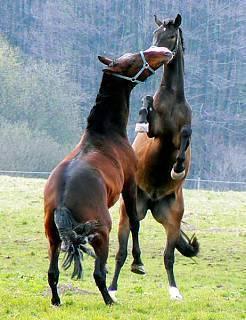 FOTKA - koně