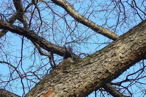FOTKA - Stále ještě veverka