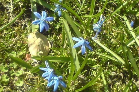 FOTKA - modrý kytky v trávě