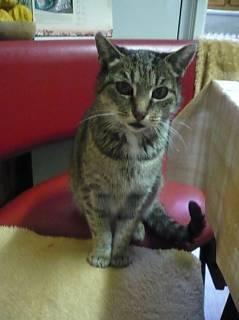 FOTKA - Naše 12ti letá kočka