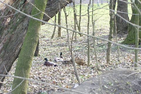 FOTKA - kačeny na procházce
