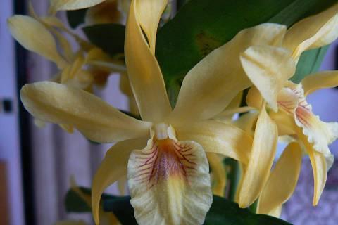 FOTKA - detail orchidejového květu