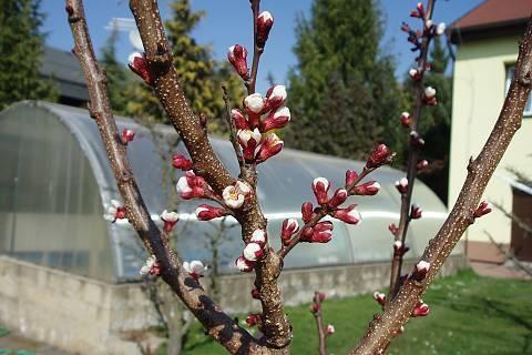 FOTKA - jaro na zahradě ,,