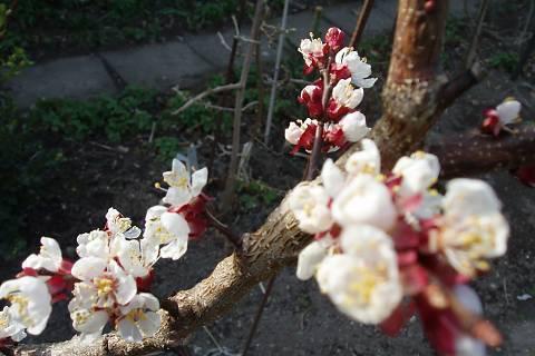 FOTKA - moje zahrada,,,,,,