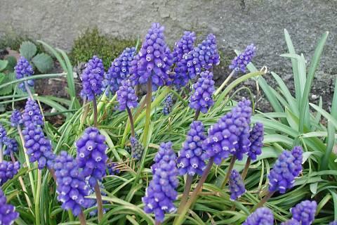 FOTKA - moje zahrada,,,,,,,,,