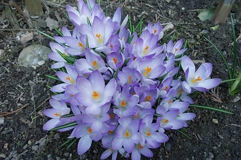 FOTKA - moje zahrada,,,,,,,,,,