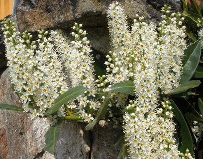 FOTKA - Voňavé květy