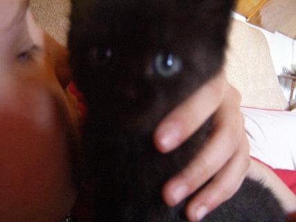 FOTKA - koťátko.,.,,,...
