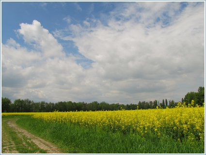 FOTKA - Záběr s cestou kolem řepkového pole pod oblaky