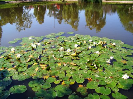 FOTKA - vyjížďka na kole 22.5.11 rybník v Kunraticích s lekníny