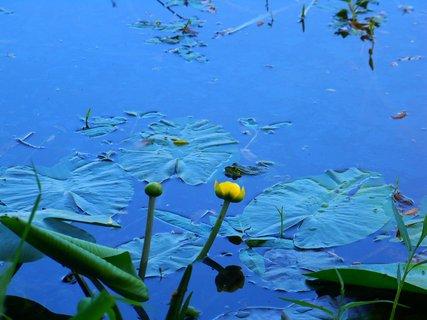 FOTKA - kdo kromě květu vidí ve vodě žabku?????