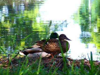 FOTKA - dvě zvědavky u rybníka .....