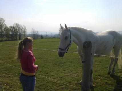 FOTKA - Kůň