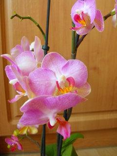 FOTKA - co orchidej to originál