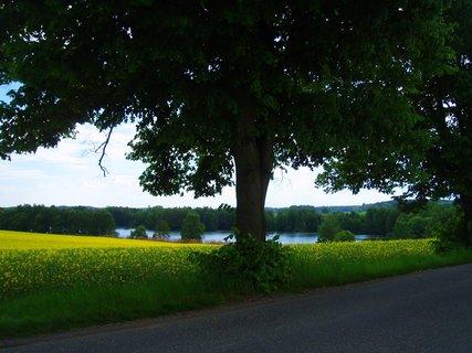 FOTKA - květnová krajina 5