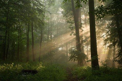 FOTKA - V lese s mlhou a sluncem