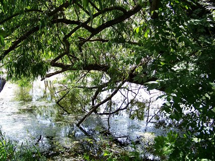 FOTKA - dnešní cyklistika, 29.5., schovka pro potápky pod stromem, Šeberák