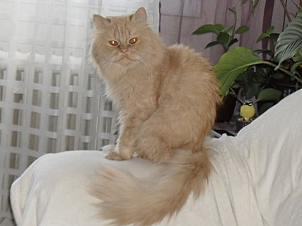FOTKA - Garfielde, žádný kytičky!