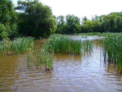 FOTKA - včerejší cyklistika, zarostlá hladina vesteckého rybníka
