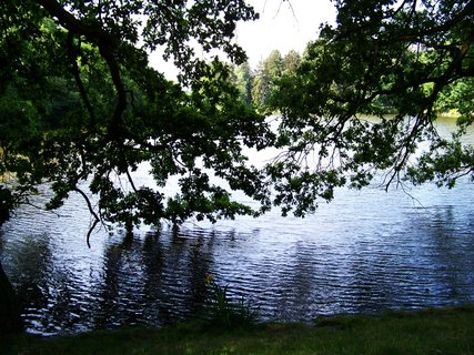 FOTKA - včerejší cyklistika, schovaný rybník za starými stromy...