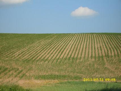 FOTKA - pole kukuřice