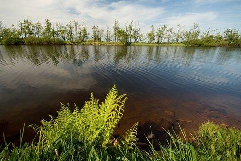 FOTKA - Dlouhý rybník