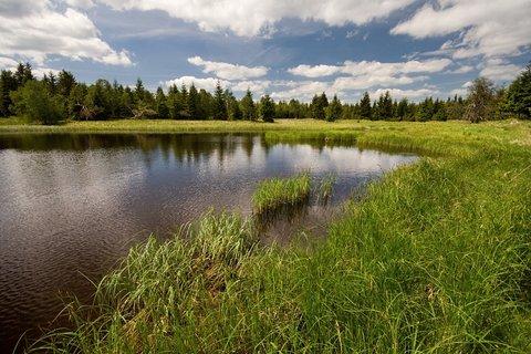 FOTKA - Černý rybník....