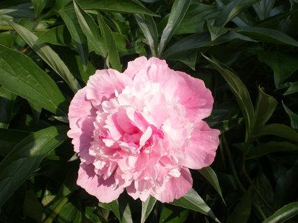 FOTKA - Rozkvetlý květ