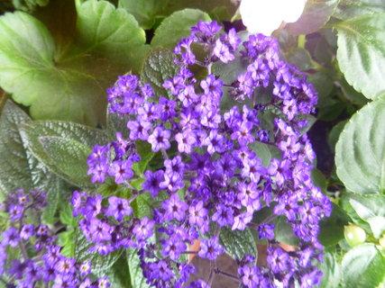 FOTKA - kytka v květináči