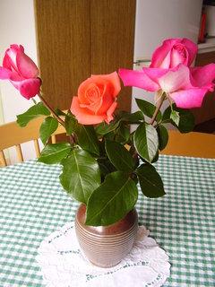 FOTKA - růže.   .
