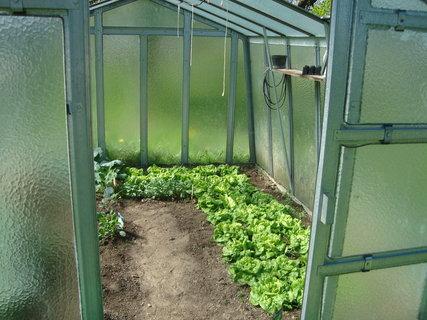 FOTKA - skleník plný salátu