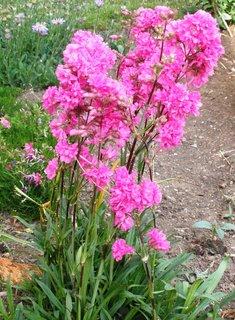 FOTKA - Růžové kytičky