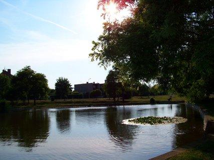 FOTKA - rybník Ohrada, slunce ve větvích