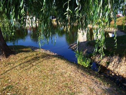 FOTKA - rybník Ohrada, přítok