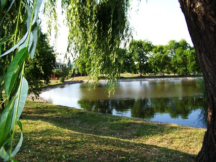 FOTKA - rybník Ohrada, u vrby