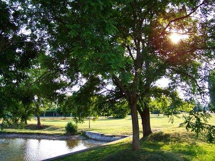 FOTKA - rybník Ohrada, slunce ve větvích stromů u břehu...