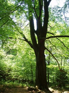 FOTKA - . pod stromem .