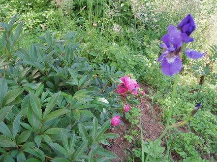 FOTKA - ze zahrady ..