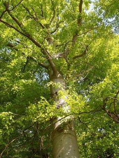 FOTKA - naučná stezka kolem Chanovic vede krásnými lesy