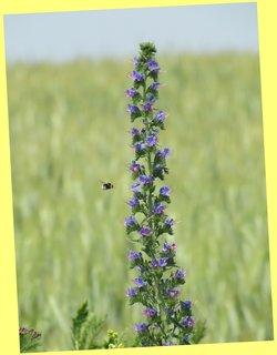 FOTKA - Květina s přilétajícím čmelákem