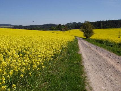 FOTKA - řepka, řepka a zase řepka....kde je obilí či kukuřice ???